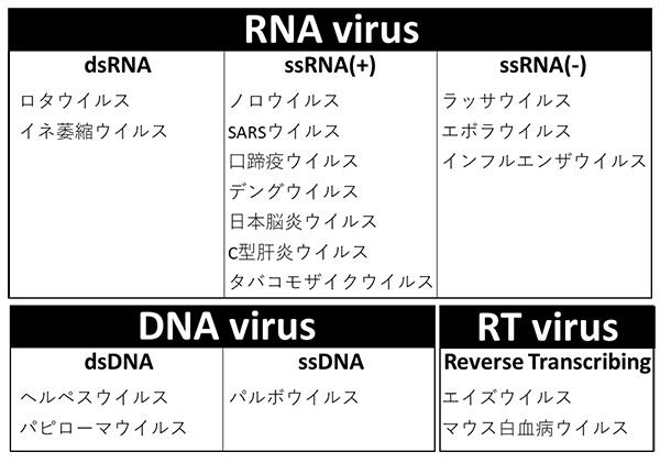 海洋微生物の中に隠された新しいウイルスワールドを発見 ~RNAウイルス ...